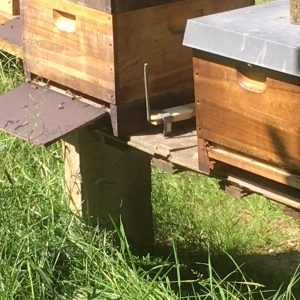 Bienen auf dem Weg zum Bienenstock