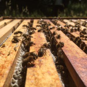 Bienen sind eigentlich sehr friedlich