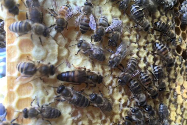Bienen bei der Arbeit!